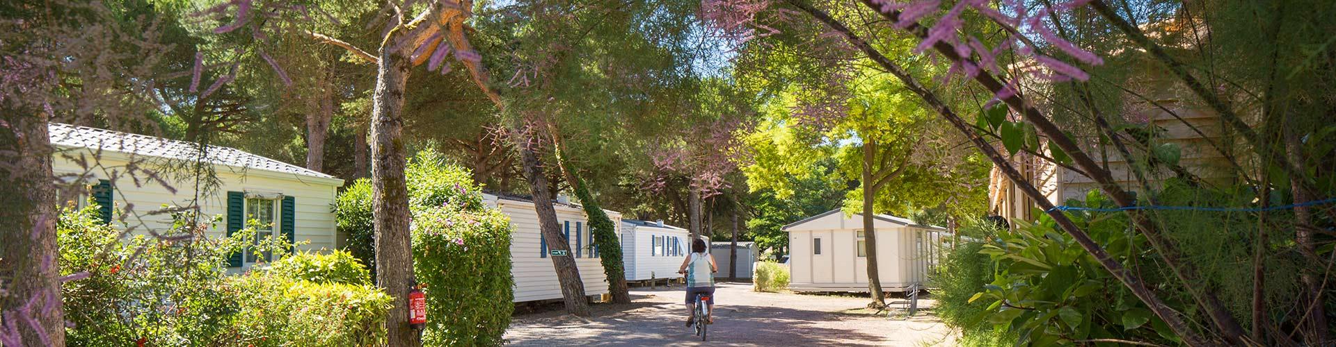 camping bois plage en r camping ile de r camping 3 etoiles ile de re. Black Bedroom Furniture Sets. Home Design Ideas